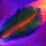 Penacho del color Fotos de archivo