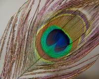 Penacho del pavo real Imágenes de archivo libres de regalías