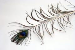 Penacho del pavo real Fotos de archivo libres de regalías