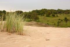Penachos de la hierba en la duna de arena Imagenes de archivo
