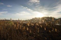 Penachos en la puesta del sol Fotos de archivo libres de regalías