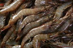 Penaeus vannamei prawns shrimps pattern Royalty Free Stock Photos
