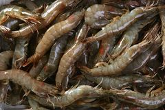 Penaeus vannamei prawns shrimps pattern Royalty Free Stock Image