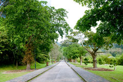 Penang botanical garden. Tropical botanical garden in  Penang state of Malaysian Stock Photos