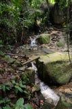 Penang Botanical Gardens Royalty Free Stock Photo