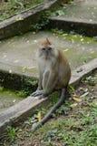 Penang Botanical Gardens Royalty Free Stock Image