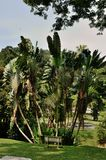 Penang Botanical Gardens Stock Images