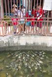 PENANG MALAYSIA-AUGUST 10, 2015:: många sköldpaddor i Kek lok royaltyfria foton