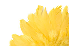 Penas amarelas Fotografia de Stock Royalty Free