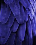 Penas azuis da arara Imagem de Stock Royalty Free