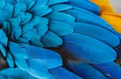 Penas azuis da arara do papagaio Imagem de Stock Royalty Free