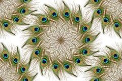 Penas bonitas do pavão como o fundo Imagens de Stock
