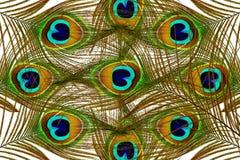 Penas bonitas do pavão como o fundo Foto de Stock Royalty Free