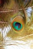 Penas bonitas do pavão Fundo da pena de pássaro Foto de Stock