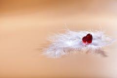 Penas brancas Dia do Valentim Coração vermelho Imagens de Stock Royalty Free