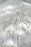Penas brancas do pavão do albino Imagens de Stock Royalty Free
