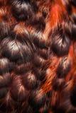 Penas coloridas brilhantes de algum pássaro Imagem de Stock