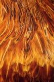 Penas coloridas brilhantes de algum pássaro Fotografia de Stock