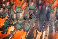 Penas coloridas brilhantes de algum pássaro Imagens de Stock