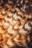 Penas coloridas brilhantes de algum pássaro Fotografia de Stock Royalty Free