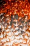 Penas coloridas brilhantes de algum pássaro Foto de Stock Royalty Free