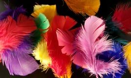 Penas coloridas em um fundo preto foto de stock royalty free