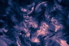 Penas coloridas fundo e papel de parede das texturas bonitas do sum?rio do close up imagem de stock