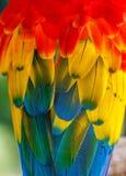 penas da arara do papagaio Imagem de Stock Royalty Free