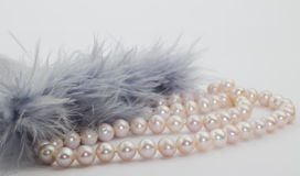 Penas da costa cor-de-rosa da pérola e do cinza azul no backg branco Imagens de Stock Royalty Free