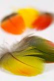 Penas de pássaro Foto de Stock