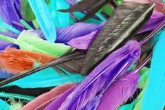 Penas de pássaro coloridas do arco-íris da pena Feathres da pena do papagaio do pato da pomba do ganso Fundo colorido arco-íris Fotografia de Stock