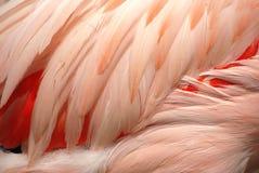 Penas do flamingo imagens de stock royalty free