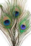 Penas do pavão Fotos de Stock Royalty Free