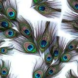 Penas do pavão em um fundo branco Teste padrão sem emenda Uma colagem das penas Repetindo o teste padrão das penas Penas com olho Imagens de Stock