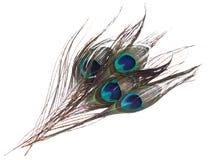 Penas do pavão no fundo branco Fotografia de Stock Royalty Free