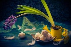 Penas dos ovos da páscoa do jacinto da composição da Páscoa Imagem de Stock Royalty Free