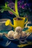 Penas dos ovos da páscoa do jacinto da composição da Páscoa Foto de Stock