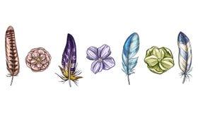 Penas e flores detalhadas de pássaro coloridas isoladas no fundo branco Um grupo de plumagem bonita do pássaro Ilustração do veto ilustração royalty free