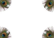 Penas Iridescent do pavão fotografia de stock