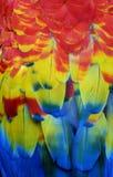 Penas Multi-coloridas da arara Fotos de Stock Royalty Free