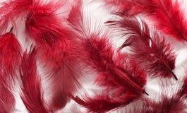 Penas pintadas Imagem de Stock
