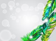 Penas verdes ilustração royalty free