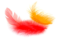 Penas vermelhas e alaranjadas Imagem de Stock