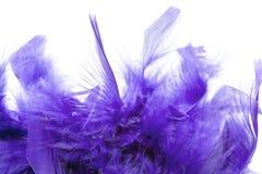 Penas violetas Imagem de Stock