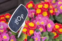 80 pence flowers Royalty Free Stock Image
