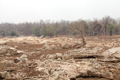 Pench river bed in pench tiger reserve Royalty Free Stock Image