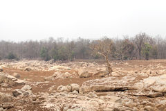Pench river bed in pench tiger reserve Royalty Free Stock Photos