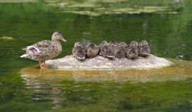 Penche le famille Image stock
