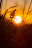 Penchement vers le soleil Photos stock