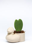 Penchez le mini pot de fleurs avec la fleur de coeur rentrée le studio Photo libre de droits